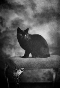 Cat Portrait 022