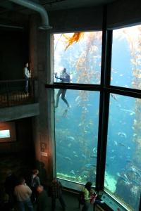 Monterey Aquarium  4249