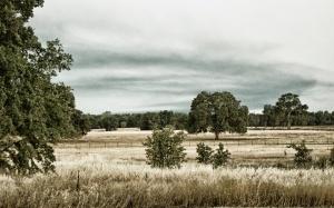 Shasta meadow  4324
