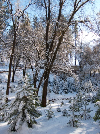Xmas tree hunt 2013 55